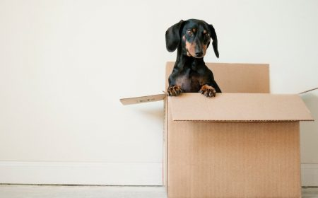 Tips for Moving During the COVID-19 Pandemic | Hire A Mover | The Chronicles of Carly